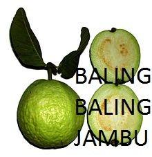 marco antoni (Jambu_Alas)